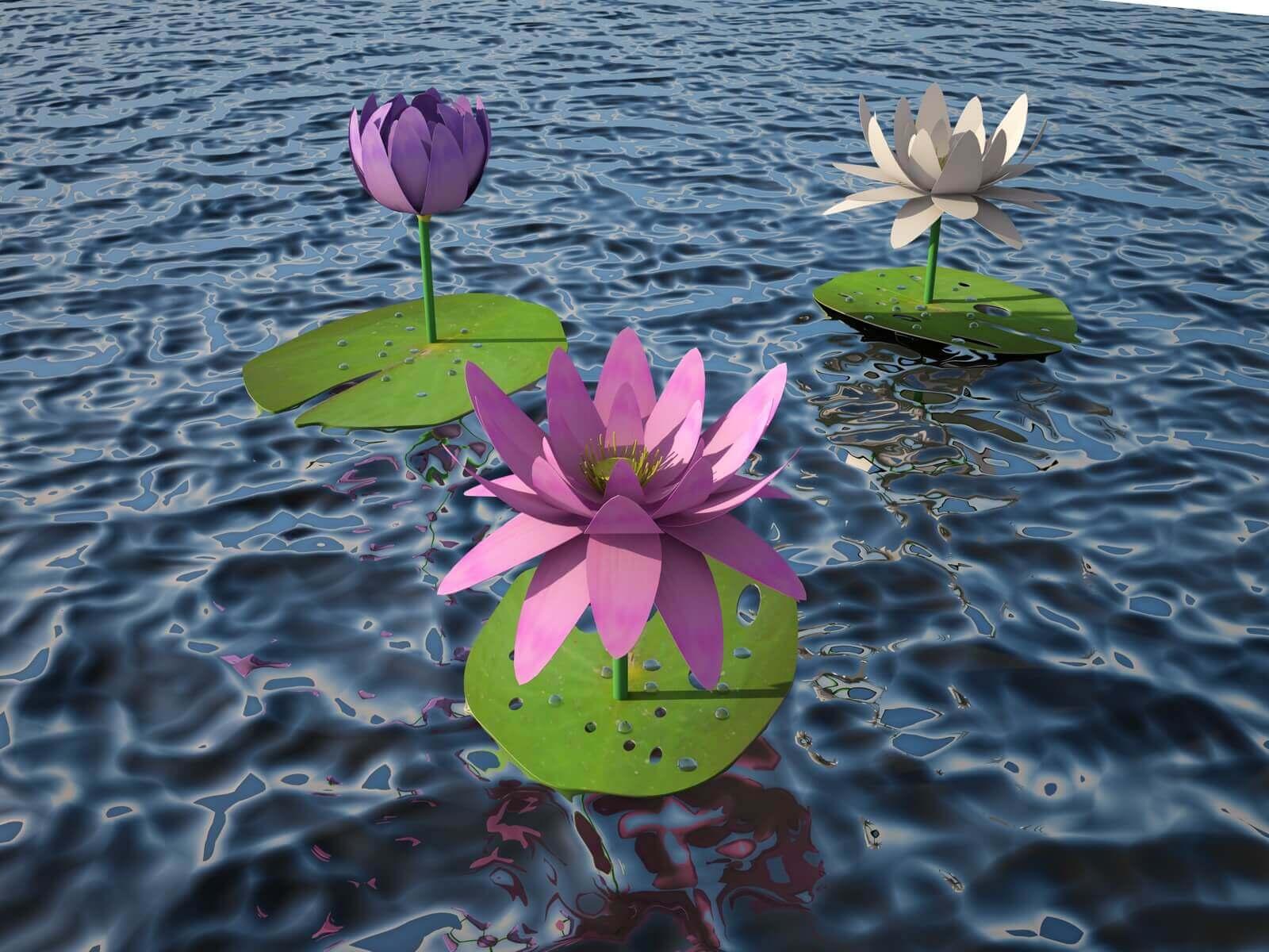 Floating Lotus Flowers 3d Model