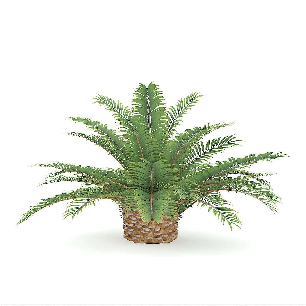 Queen Sago Plant 3D Model
