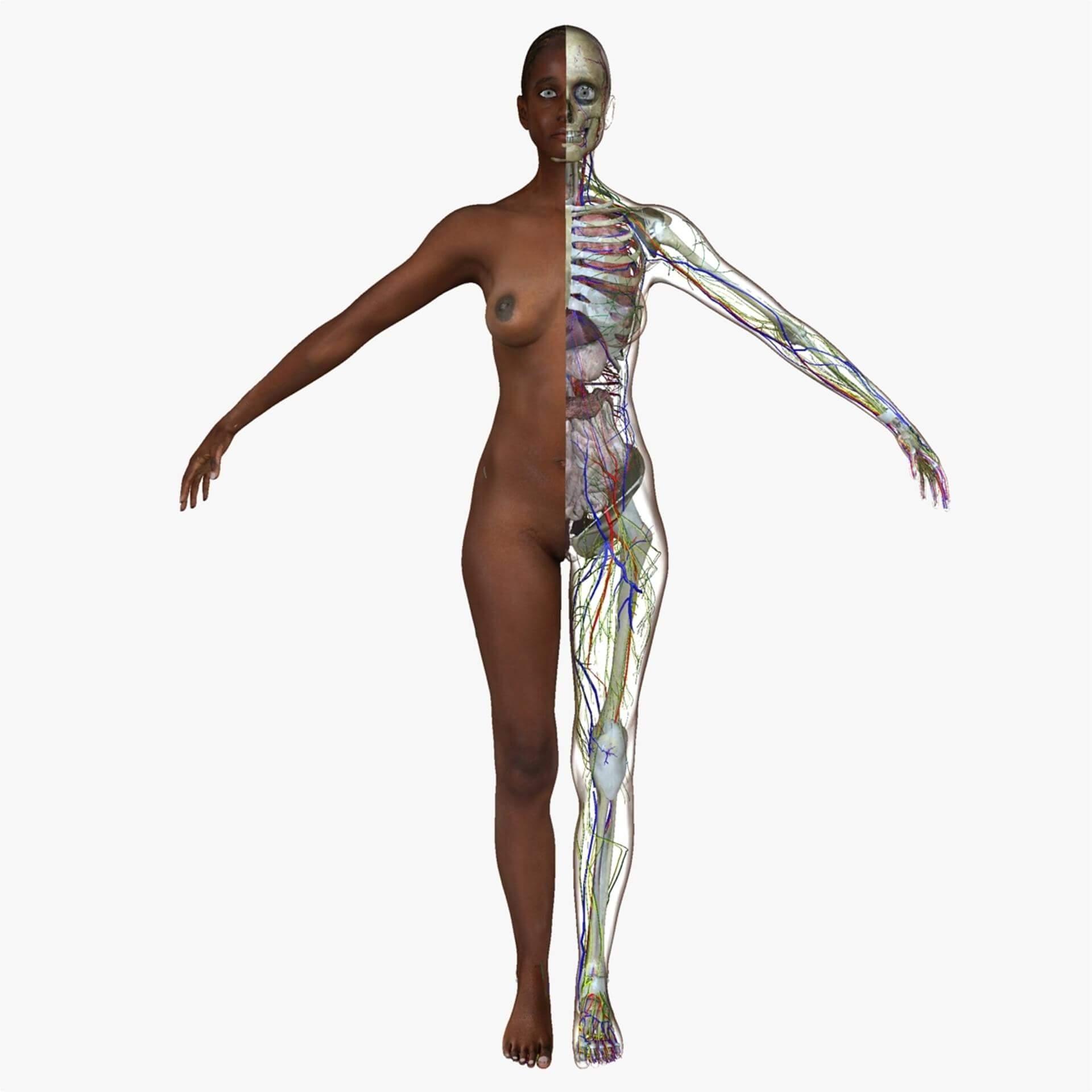 Female African American Anatomy 3d Model