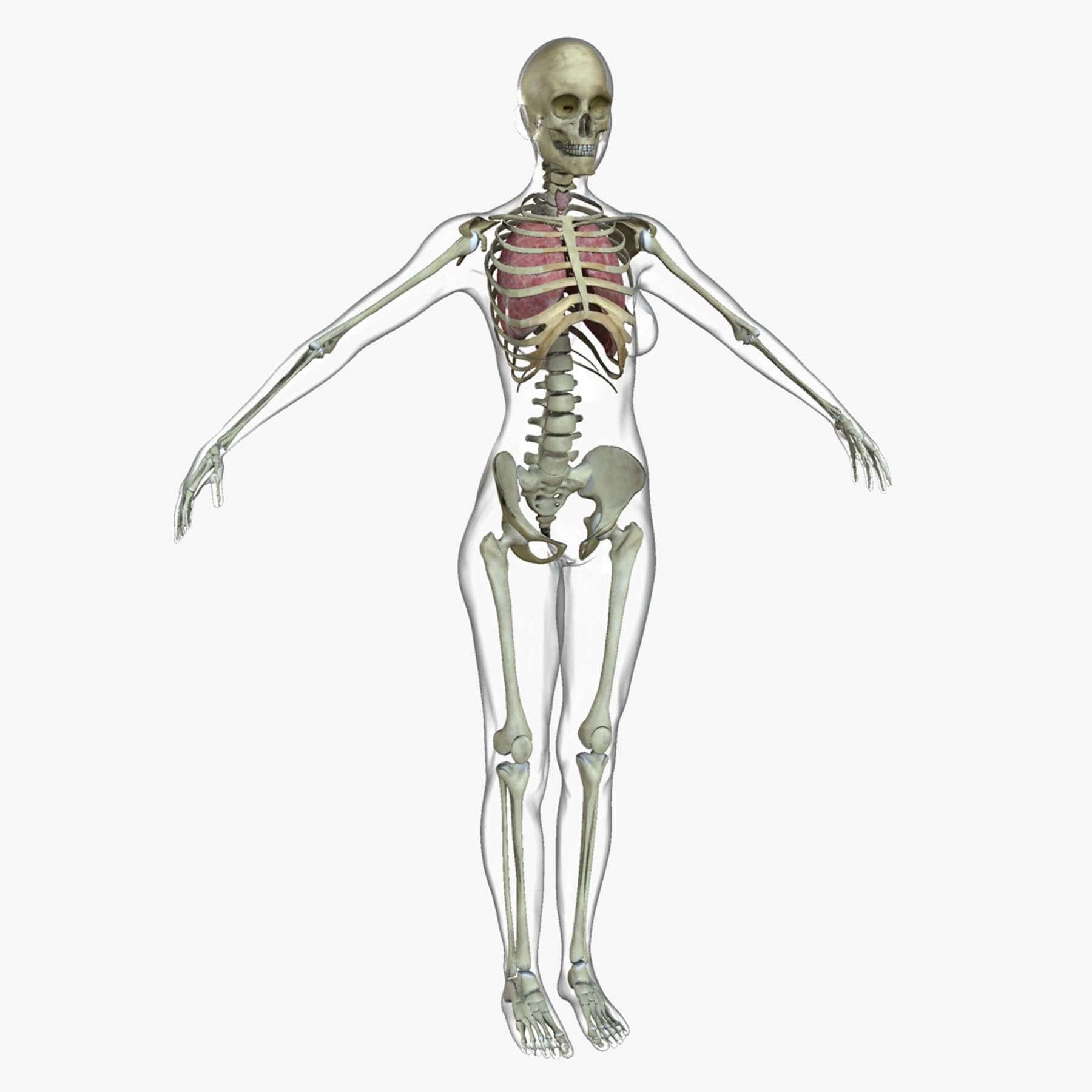 Female Full Body Anatomy Combo 3d Model