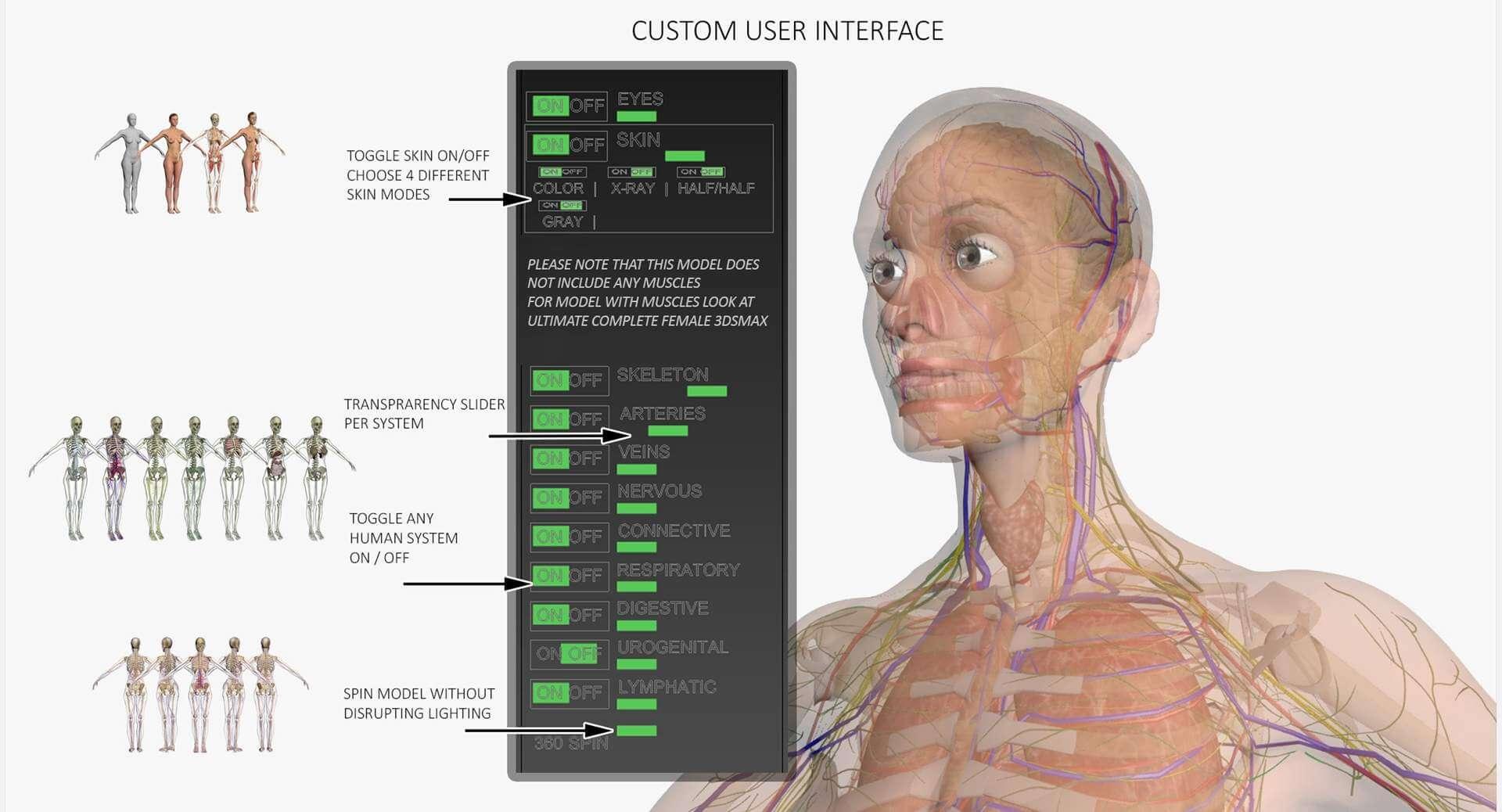 Female Full Body Anatomy 3d Model
