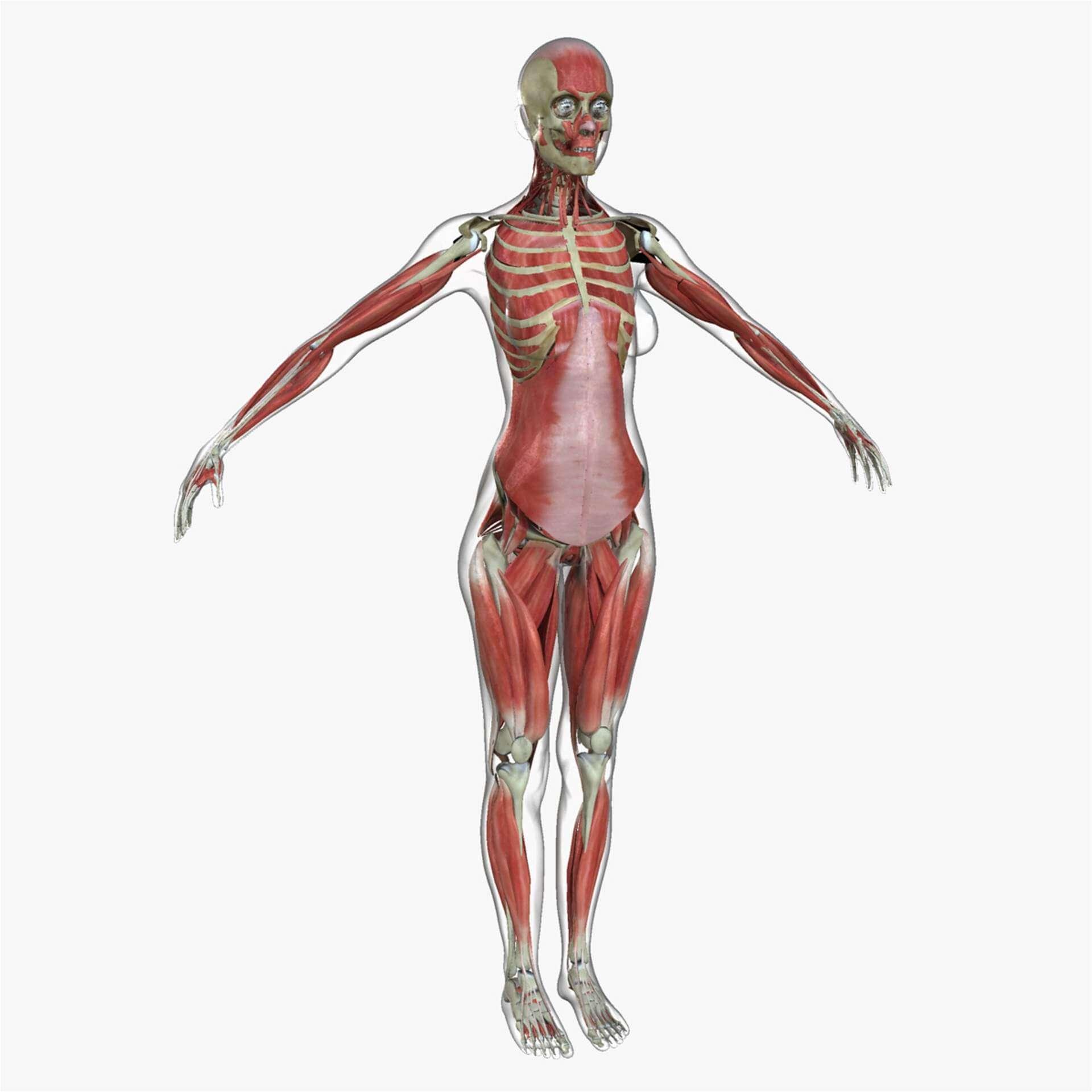 Complete Anatomy Female Model