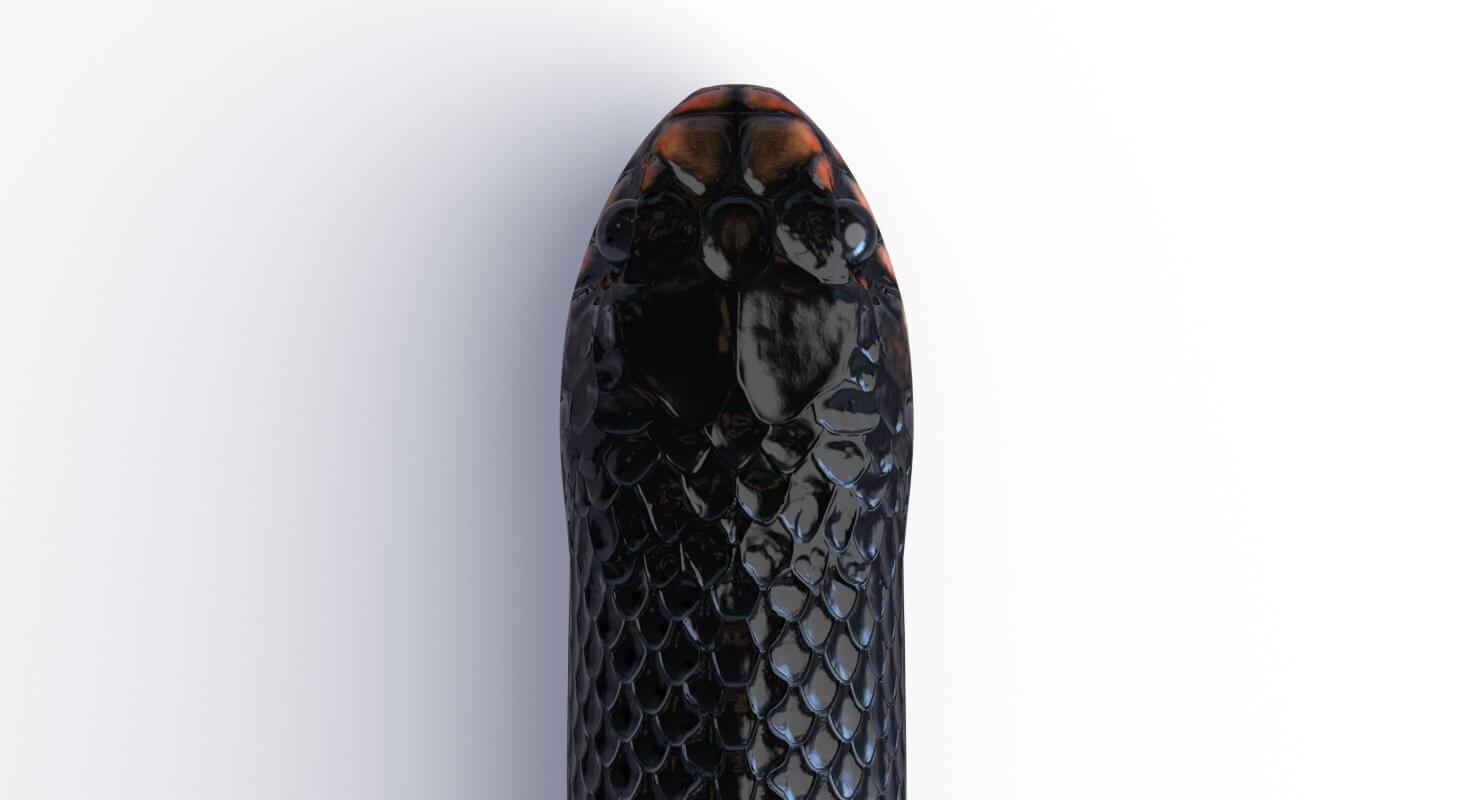 9fd091950a Red Bellied Black Snake 3D Model