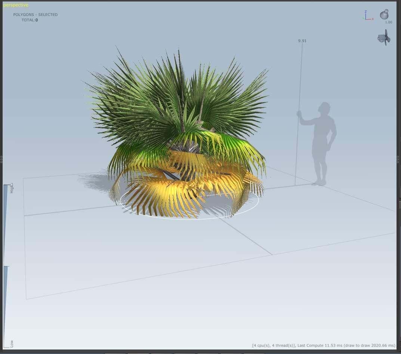 Small Fan Palm Tree 3D Model