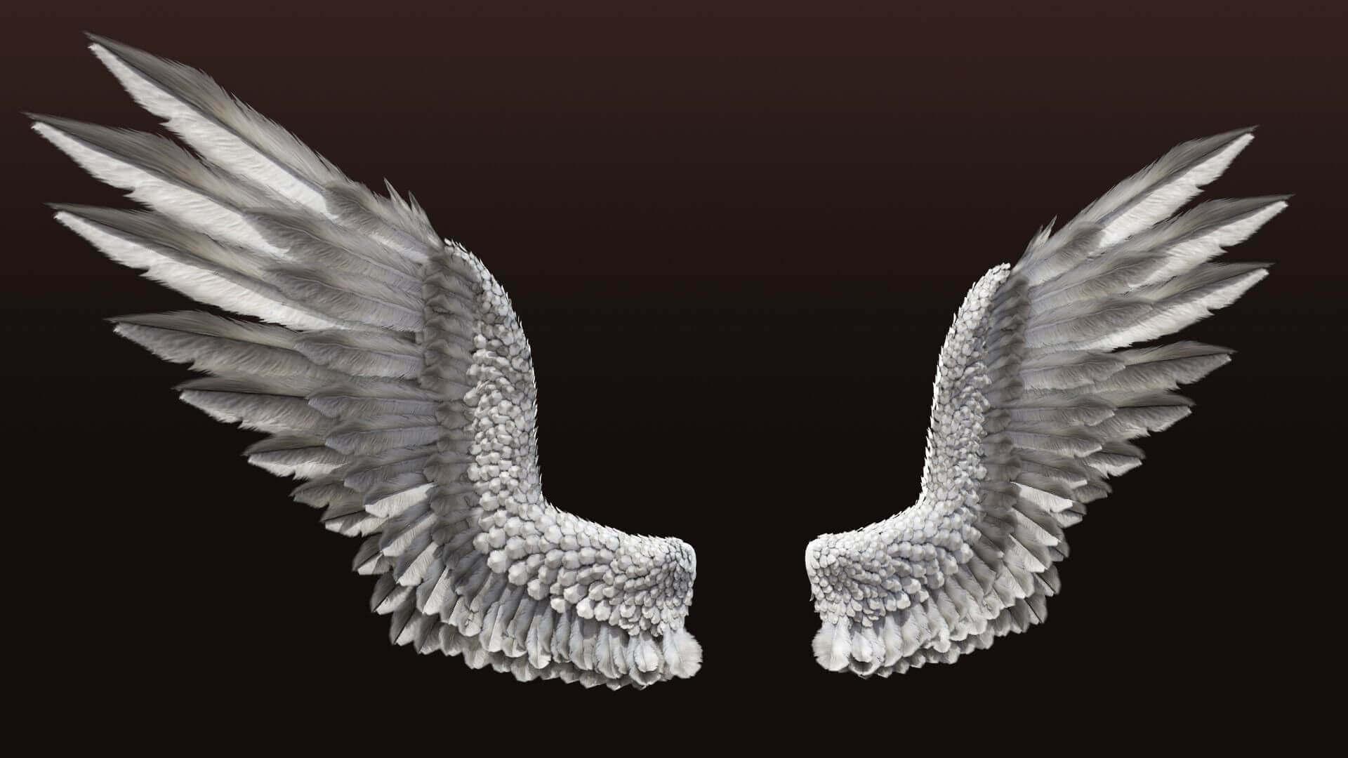 Картинки крылья большие